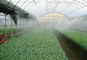 Инжекторное увлажнение тепличного хозяйства