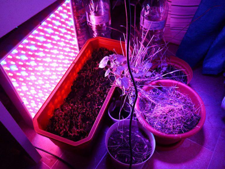 Как сделать лед лампу для растений